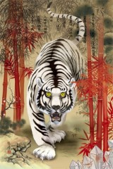 White tiger and red bamboo
