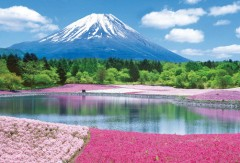 Fuji with flowers