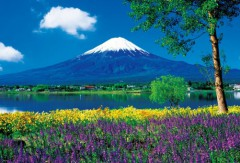Fuji from the lavender fields