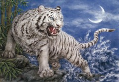 White tiger of the west
