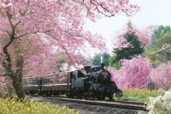 Springtime under steam