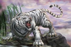 White cloud tiger