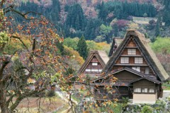 Autumn in Shirakawa-go