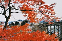 Kintaikyo bridge (maples)
